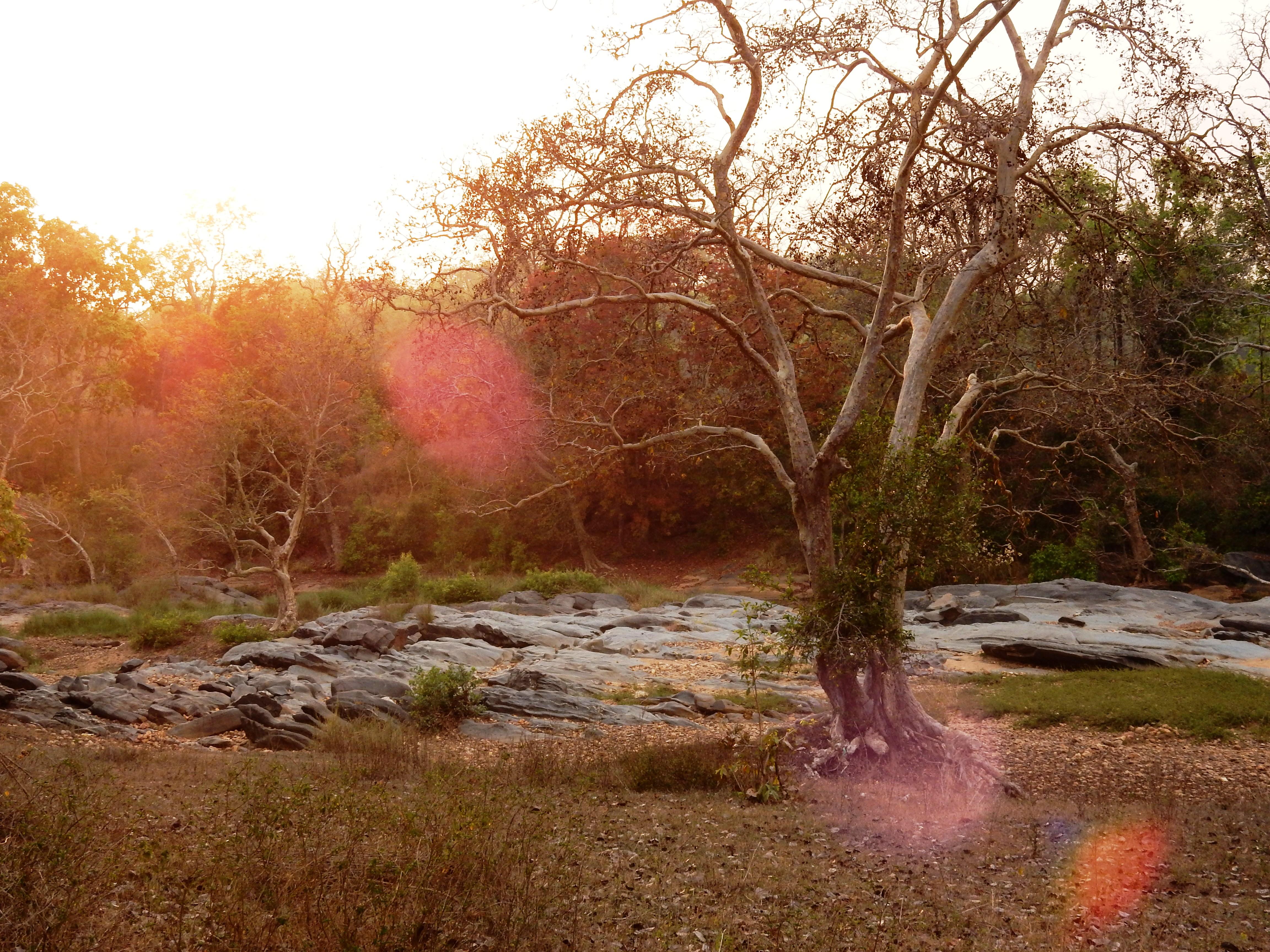 mowgli trails, taj safaris, and beyond, safaris in india
