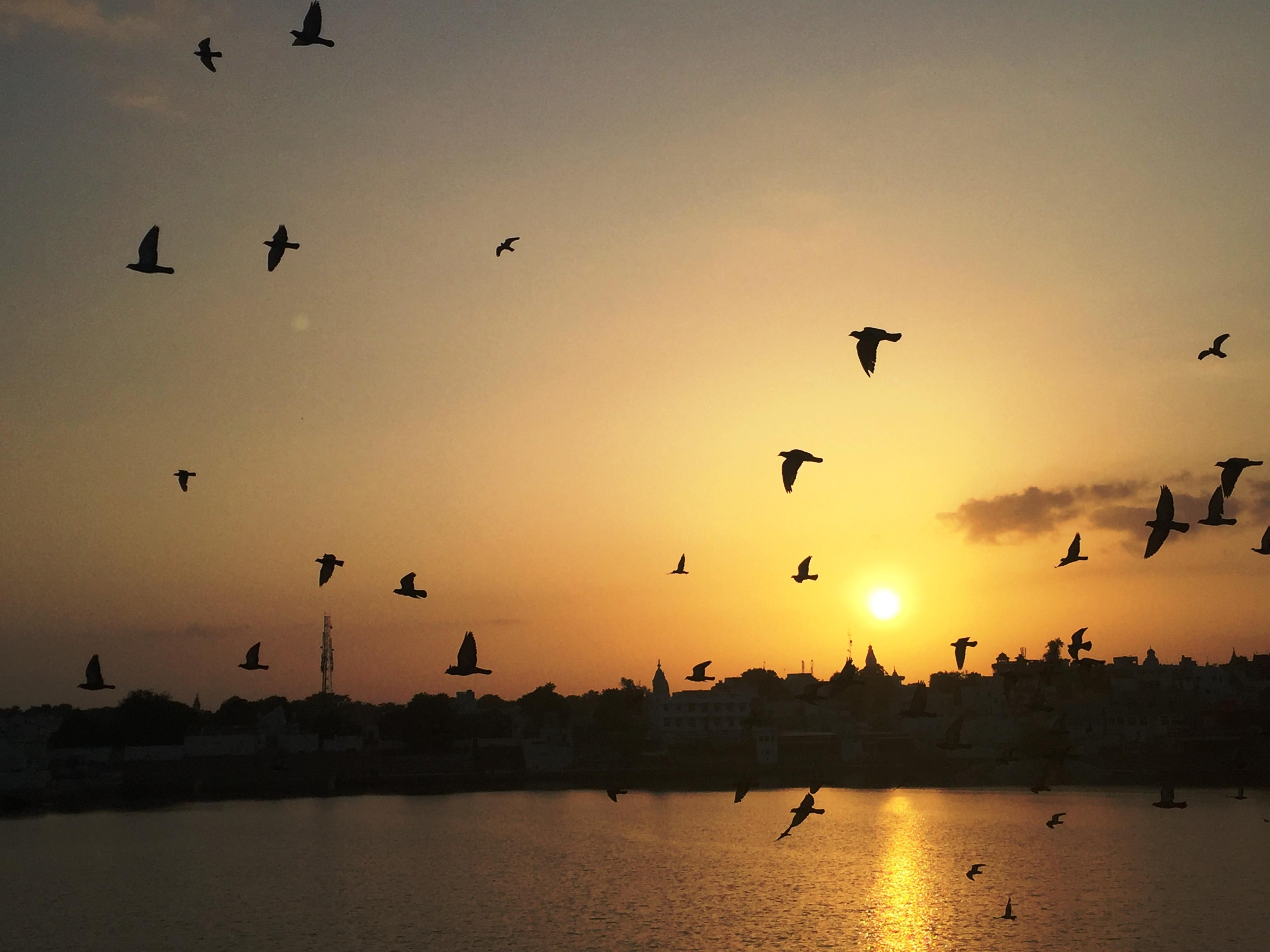 How To Enjoy A Trip To Pushkar And Ajmer