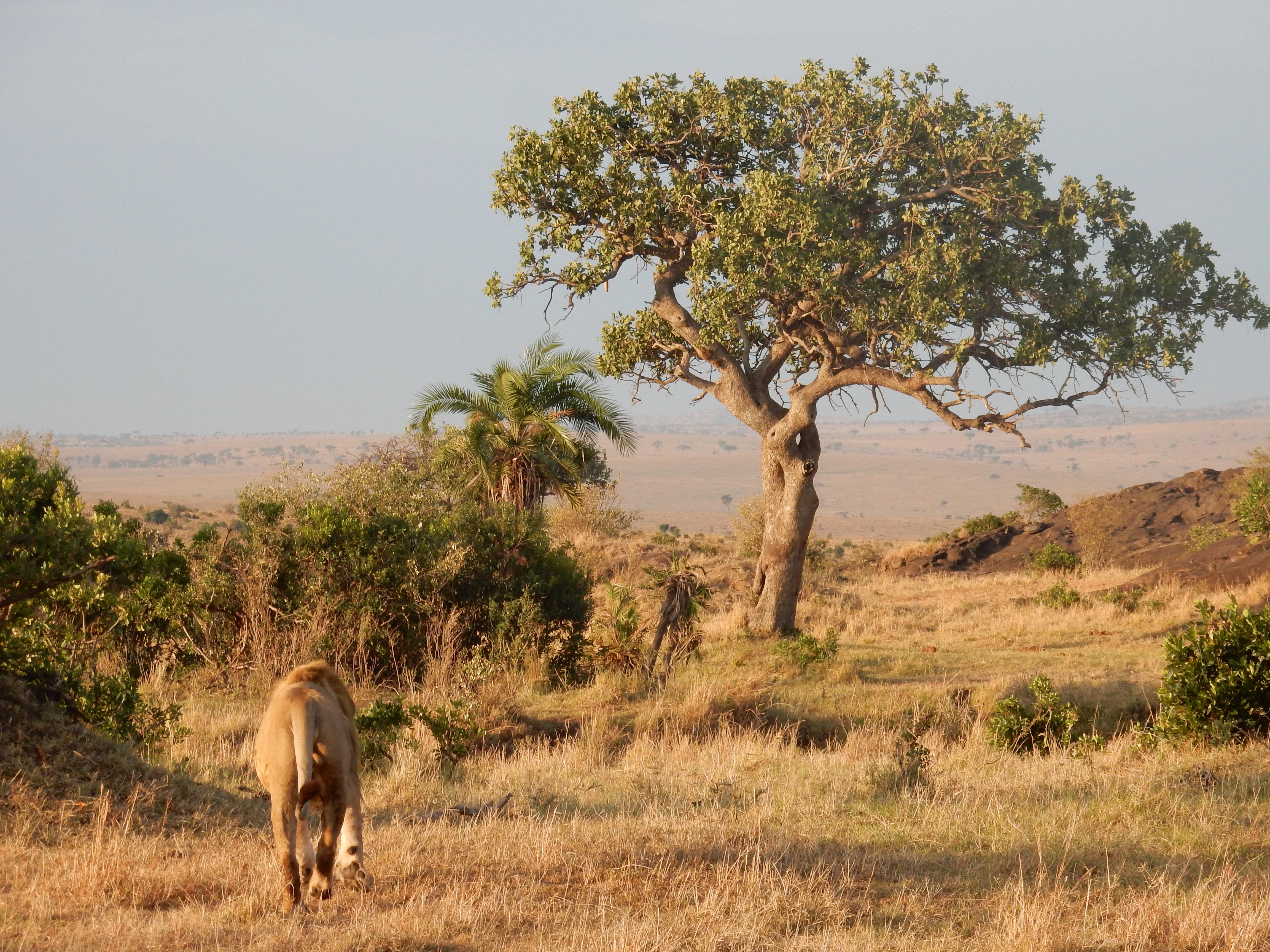 The beauty of Masaai mara, Maasai mara, masai mara,Kenya, Africa