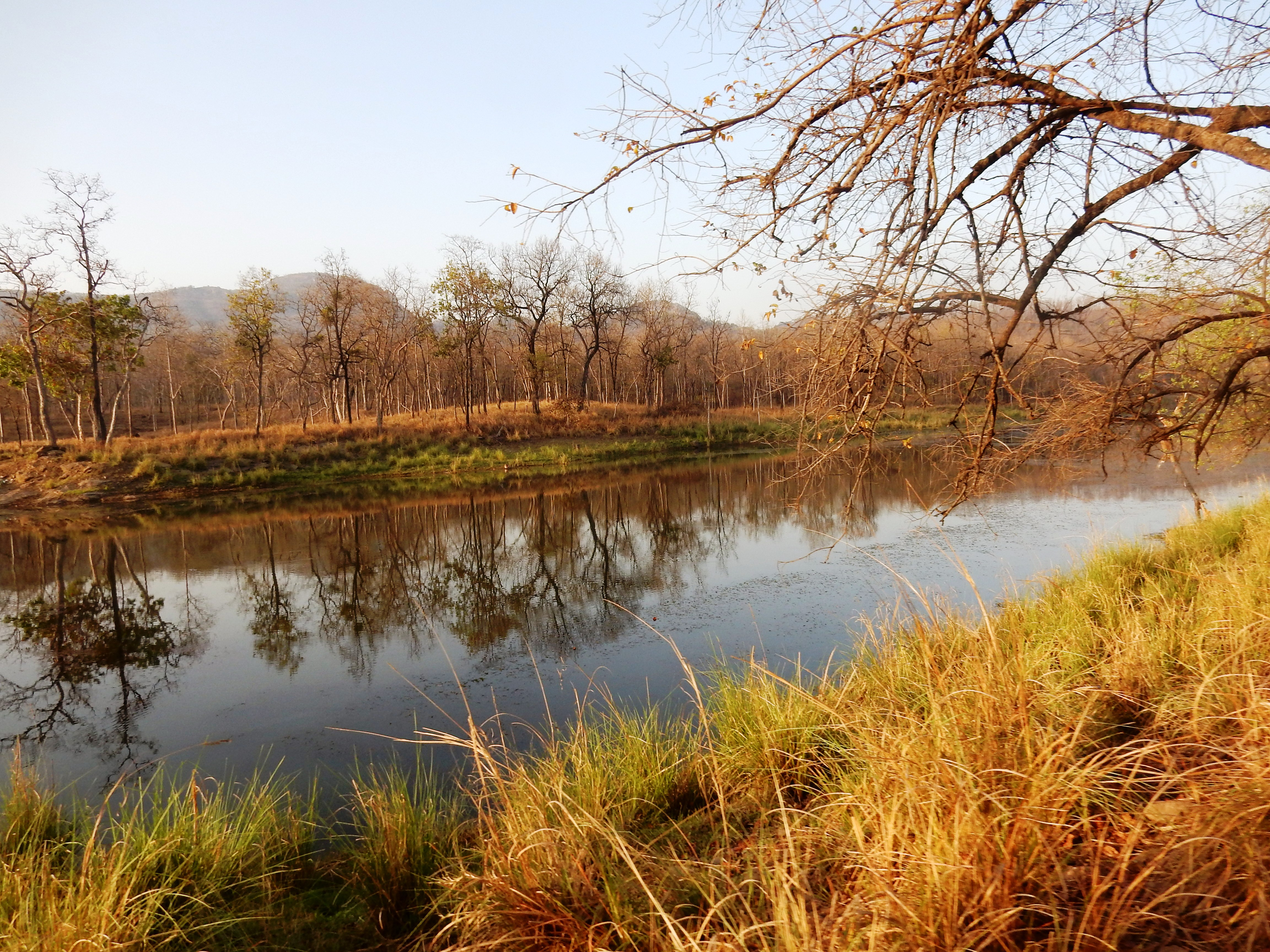 Why You Need To Visit Forsyth Lodge And The Satpura National Park